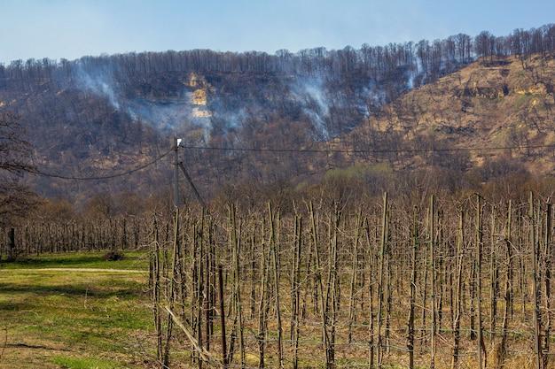 春の日に山火事で燃えている丘の上のリンゴ園