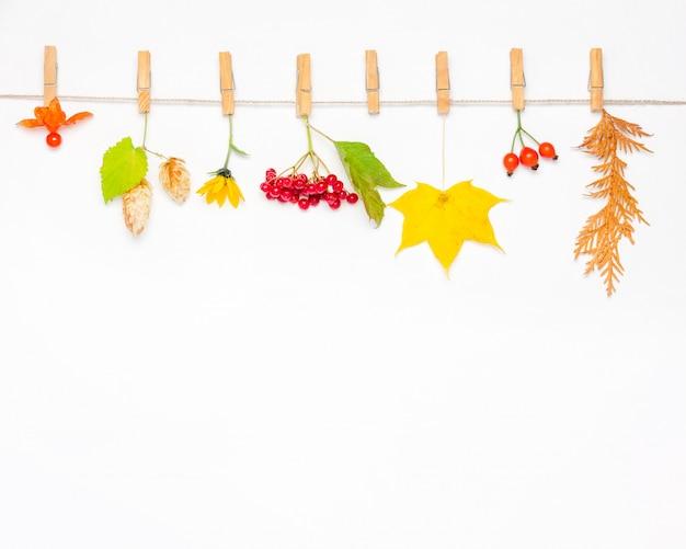 秋の花、カエデの葉、ベリーローズヒップ、赤いガマズミ属の木、ホップコーン、サイサリス。