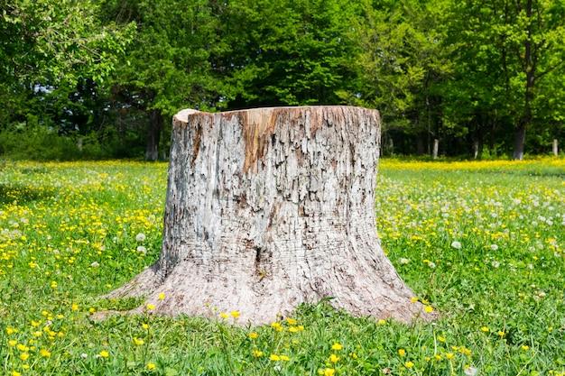 庭で木の幹をカット