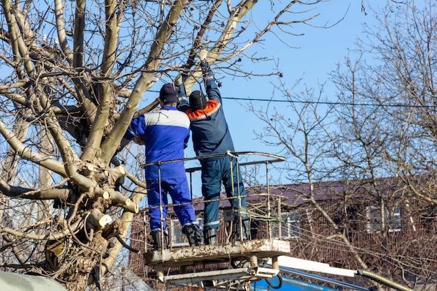 Мужчины-электрики срезают ветки деревьев, устраняя разрыв линии электросети