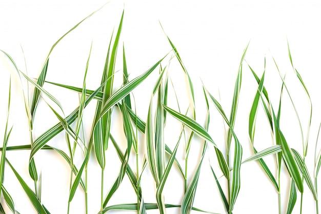 白い縞、白い背景で隔離の装飾的な緑の芝生