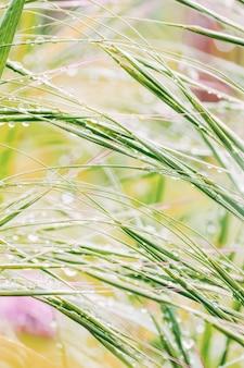 Маленькие капельки дождя на зеленой траве