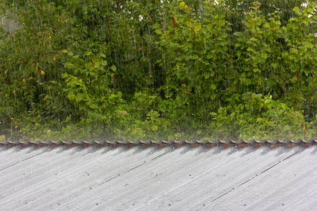 Летний дождь на фоне зеленой листвы и небольшого града, падающего на металлическую крышу