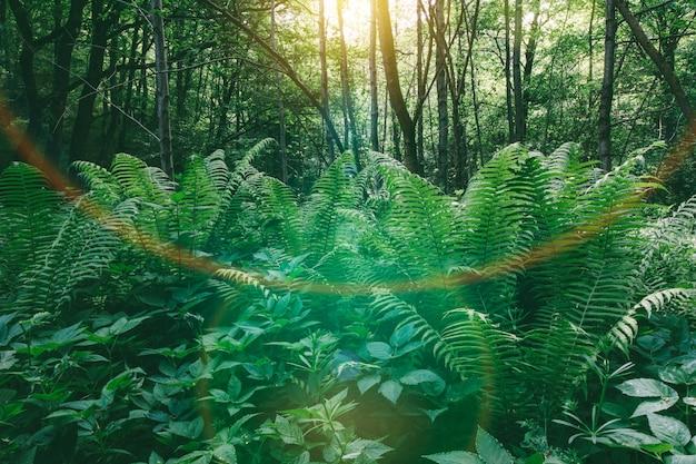 春夏の自然の風景、朝の森の中の最初の太陽光線