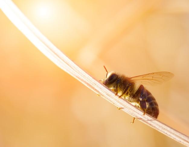 小さな蜂は日光までブレードに沿って移動します