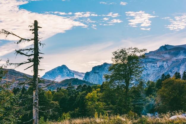 夕方には山脈を背景に森林の秋の風景