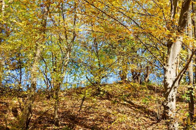 暖かい晴れた日にカラフルな秋の森