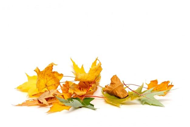 白で隔離される乾燥したカエデの葉