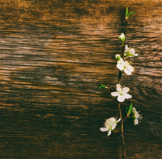 古い木製グランジに咲く枝