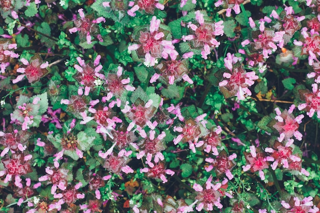 野生の草の死んだイラクサ紫、トップビューの自然。着色。春夏