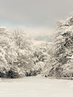雪の森の空き地、冬の風景