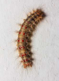 灰色の大きな毛虫のマクロ写真