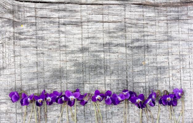 Маленькие цветы фиалки выложены в ряд на старой серой доске в трещинах