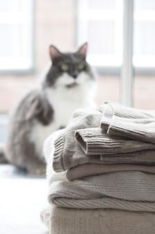 Домашняя кошка на витрине, много зимней теплой одежды. уютная атмосфера и город за окном.