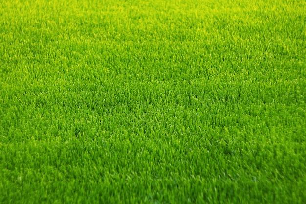 緑の芝生の背景。素晴らしい草の質感。