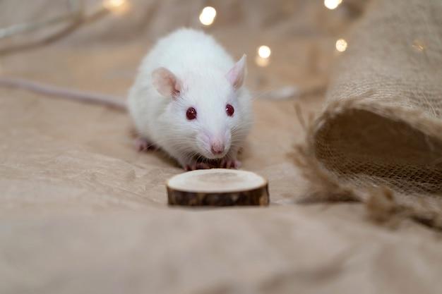 Крыса сидит на крафт-бумаге.