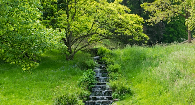 緑の夏の公園の滝。