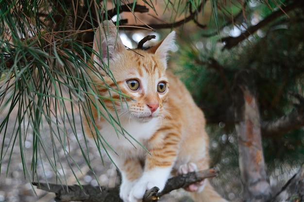 木の上の赤い子猫。
