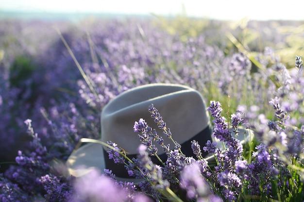 ラベンダー畑の帽子