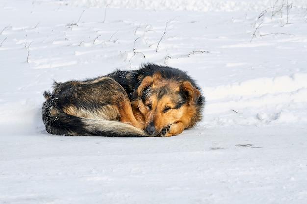 冷ややかな天気で雪の上の茶色のホームレスの犬。犬は雪の上で凍る