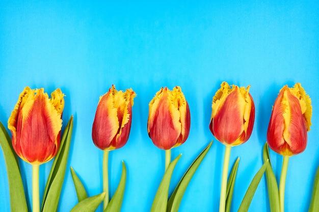 コピースペースと青色の背景に横たわっている赤黄色のチューリップのトップビュー