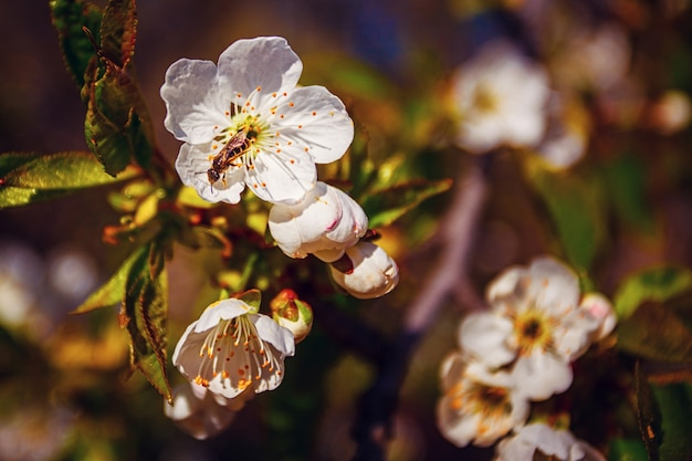 春の自然の桜