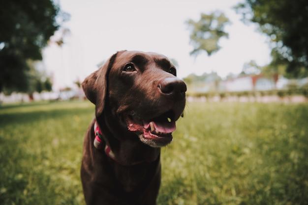 Черная собака позирует в летнем парке грин