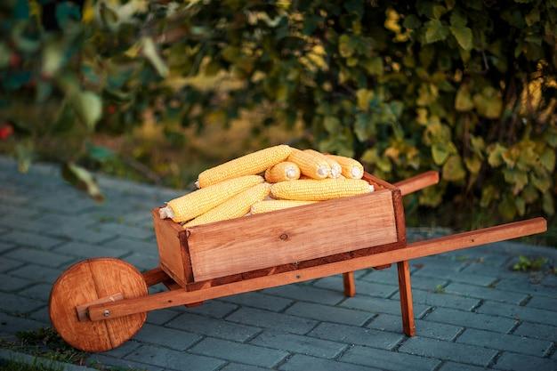 トウモロコシの穂軸を持つ木製の手押し車。カラフルなトウモロコシの穂軸。木製の手押し車と緑の木々。