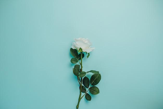 春の鮮度。真ん中に緑の葉と白いバラ。長い茎を持つ単一の白いバラ。