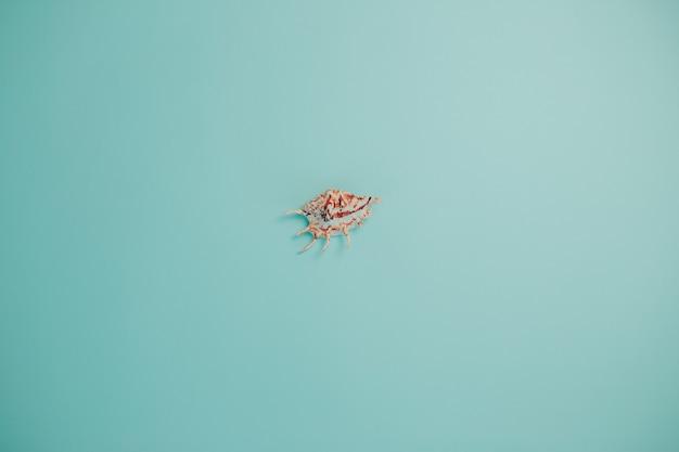 単一の貝殻。海のシェルとコピースペースを持つ夏の時間カード。