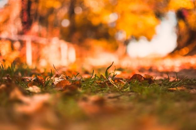 Теплый осенний пейзаж в утреннем лесу на рассвете. выборочный фокус на пожелтевшей траве. концепция золотая осень.