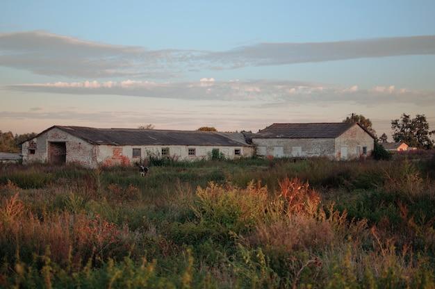 小麦やライ麦のフィールドに沈む夕日