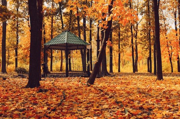 秋の日当たりの良い風景。