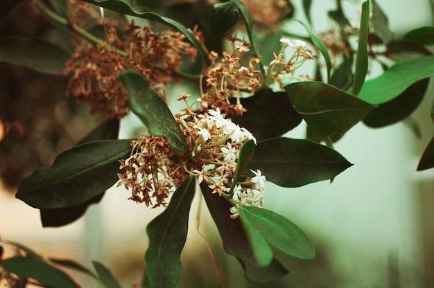 Тропические цветы цветут в ботаническом саду. концепция садоводства и экологически чистого продукта.