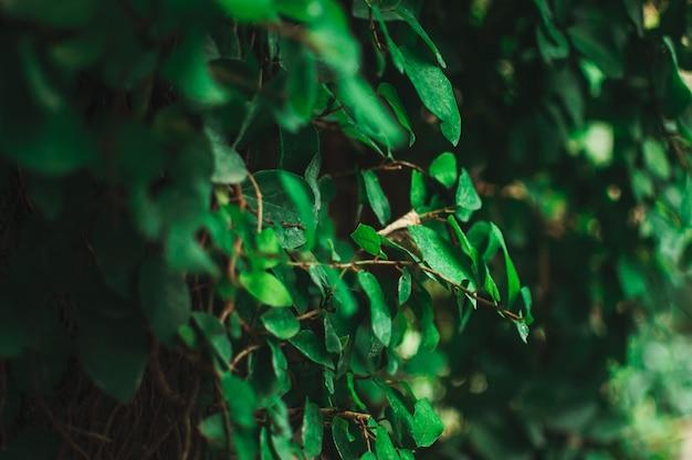 Абстрактная предпосылка творческих тропических листьев. расположение зеленых листьев из жарких стран. понятие природы, чистоты и кислорода.