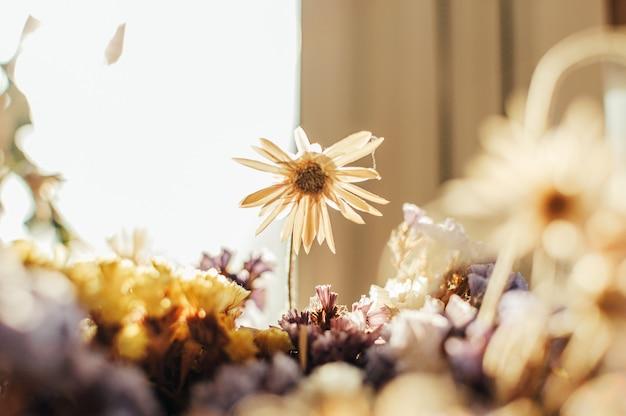 Сухие цветы на солнце