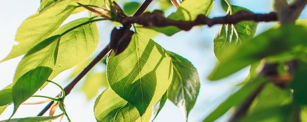 Зеленые листья на дереве в солнечном свете