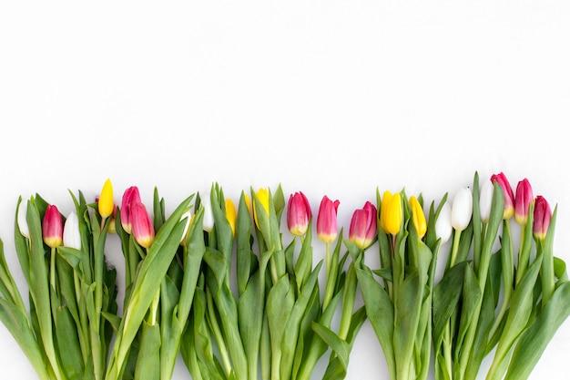 雪の背景に春の花