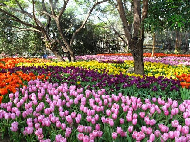 庭に咲く美しいチューリップの花