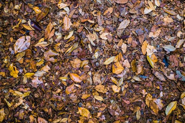 茶色の森林土壌の背景にカラフルな秋の落ち葉