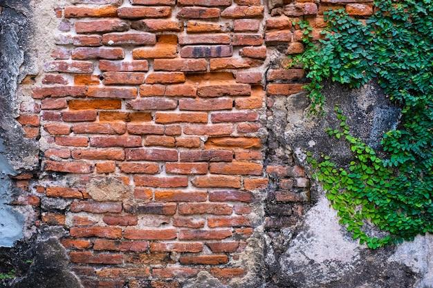 古い赤レンガの壁の質感と緑の葉が端にそれに掛かっています。