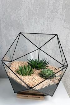 多肉植物と白いテーブルの上の小さなサボテンのガラス花瓶の花瓶。小さなサボテンのある小さな庭。家の屋内植物。