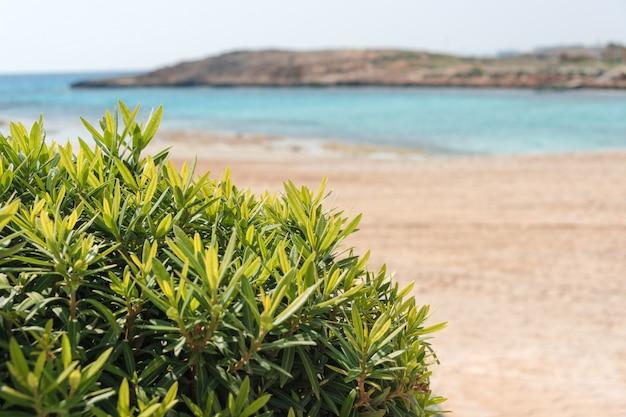 美しいビーチと熱帯の海。夏の休日の背景。旅行やビーチでの休暇、テキスト用の空きスペース
