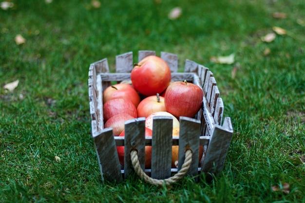 Время сбора урожая, свежие яблоки в корзине на зеленой траве. выборочный фокус