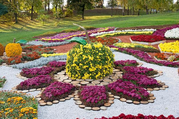 Цветник в форме яблока с разноцветными хризантемами. парковая зона в киеве, украина.