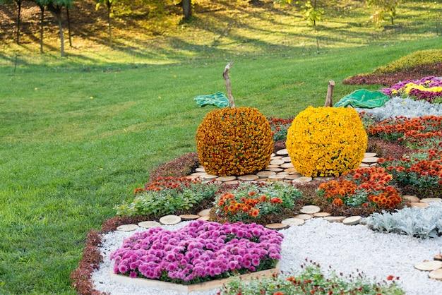 Цветники в форме яблока с разноцветными хризантемами. парковая зона в киеве, украина.