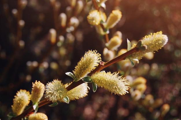 春の花。美しく開花した木の枝。春のシーズン。