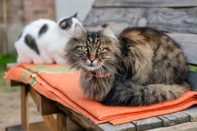 Крупный план кота сидя на стенде с запачканной предпосылкой. тихий кот сидит на улице в летнее время.