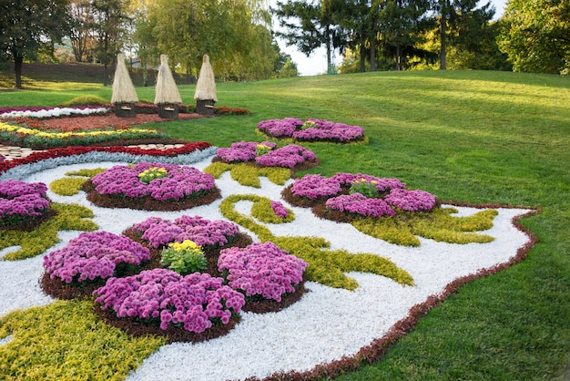 カラフルな菊の花壇。ウクライナ、キエフの公園。