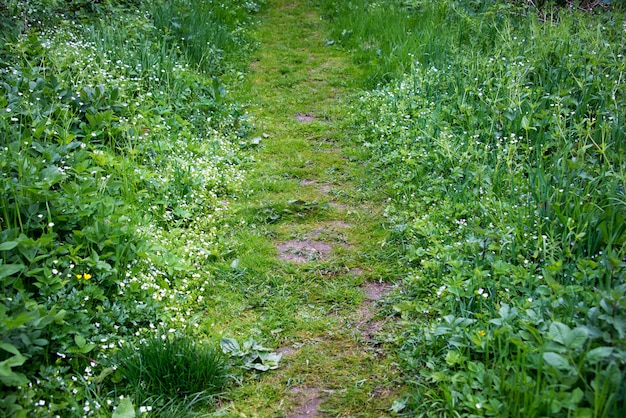 Путь в лесу